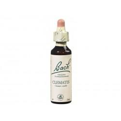 Fleur de Bach CLEMATIS - 20ml - PHARMACIE VERTE - Herboristerie à Nantes depuis 1942 - Plantes en Vrac - Tisane - EPS - Homéopat