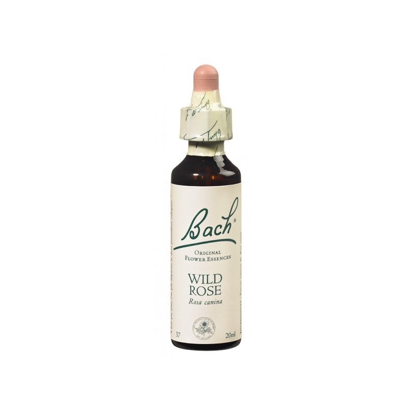Fleur de Bach WILD ROSE - 20ml - PHARMACIE VERTE - Herboristerie à Nantes depuis 1942 - Plantes en Vrac - Tisane - EPS - Bourgeo