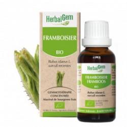 HERBALGEM FRENE - 30ml - PHARMACIE VERTE - Herboristerie à Nantes depuis 1942 - Plantes en Vrac - Tisane - EPS - Homéopathie - G