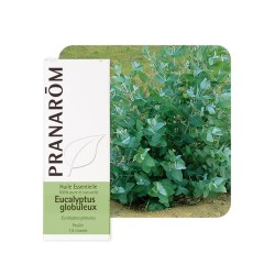 Eucalyptus Globuleux HE - 10ml - PHARMACIE VERTE - Herboristerie à Nantes depuis 1942 - Plantes en Vrac - Tisane - EPS - Homéopa