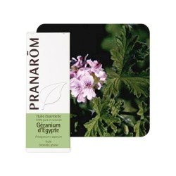 Géranium d'Egypte HE - 10ml - PHARMACIE VERTE - Herboristerie à Nantes depuis 1942 - Plantes en Vrac - Tisane - Phytothérapie -