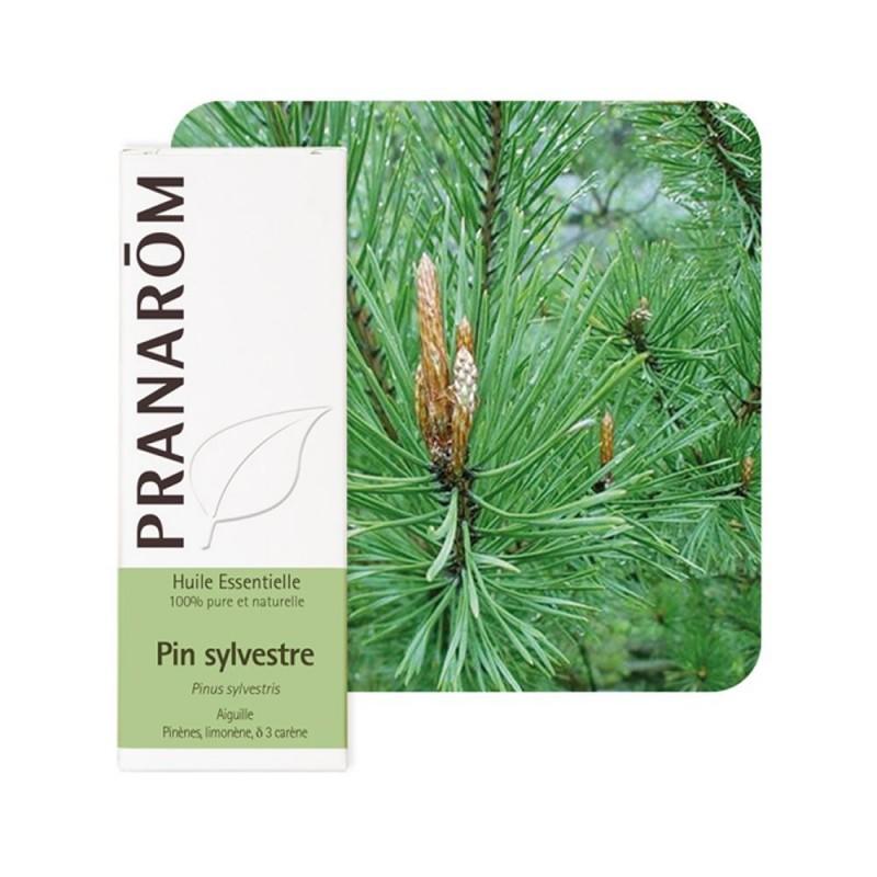 Pin Sylvestre HE - 10ml - PHARMACIE VERTE - Herboristerie à Nantes depuis 1942 - Plantes en Vrac - Tisane - EPS - Homéopathie -