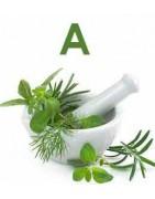 Catégorie A - Herboristerie depuis 1942 - Nantes - EPS - bourgeon - aromatherapie - plante en vrac : Absinthe grande sommité ...