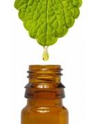 Catégorie Huiles Essentielles - Herboristerie depuis 1942 - Nantes - EPS - bourgeon - aromatherapie - plante en vrac : Basili...