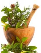 Catégorie T - Herboristerie depuis 1942 - Nantes - EPS - bourgeon - aromatherapie - plante en vrac : Thé Vert Feuille , Thym ...